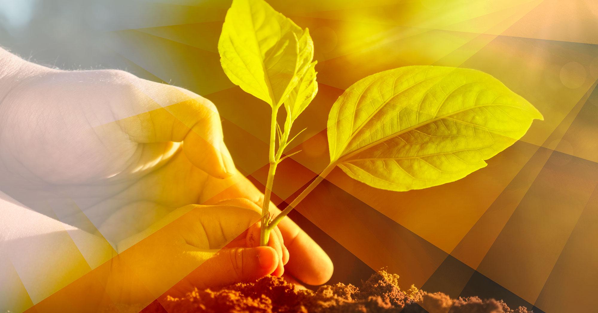 Sur le terrain du développement durable